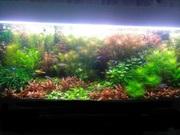 Удобрения(микро,  макро,  калий,  железо) для аквариумных растений. ПОЧТ(