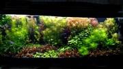Удобрения(микро,  макро,  калий,  желез0) для аквариумных растений. П0чт(
