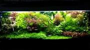 Удобрения(микро,  макро,  калий,  желез0) для аквариумных растений. П0ч=