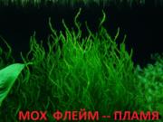 Мох феникс. НАБОРЫ растений для запуска. ПОЧТОЙ и ма1